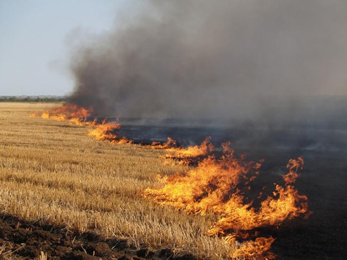 Спалювання сухої трави спричиняє пожежі у лісах та на торфовищах