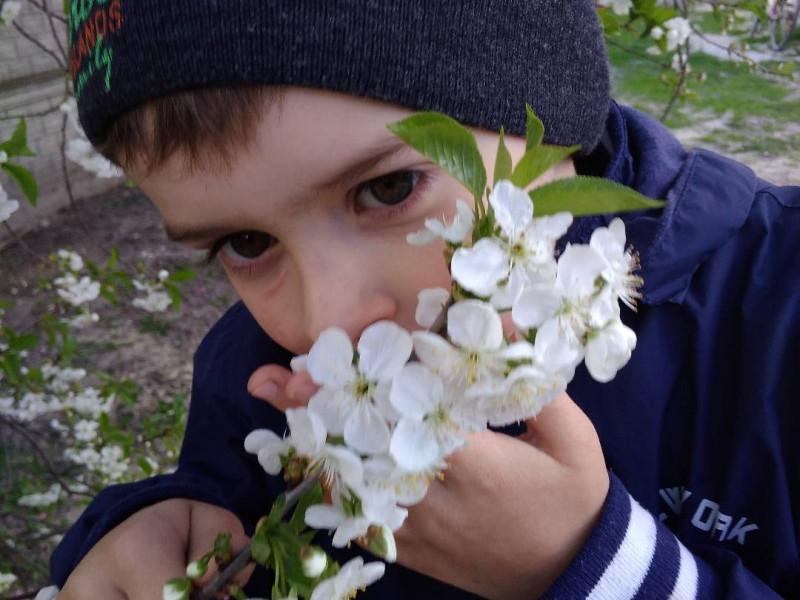 У Вишнівській ОТГ визначили найкращі фото цвітучої вишні