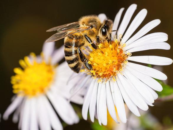 Пасічникам Любомльщини заплатять за утримання бджіл