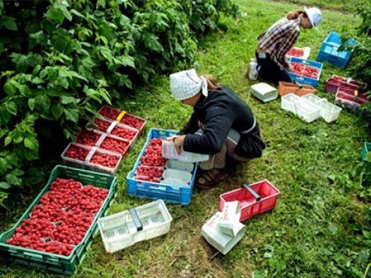 Україна та Польща готують угоду щодо сезонних працівників