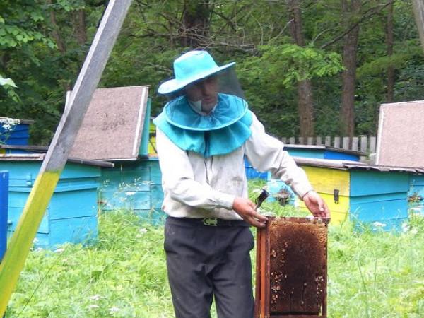 У Замлинському лісництві розпочався медовий сезон