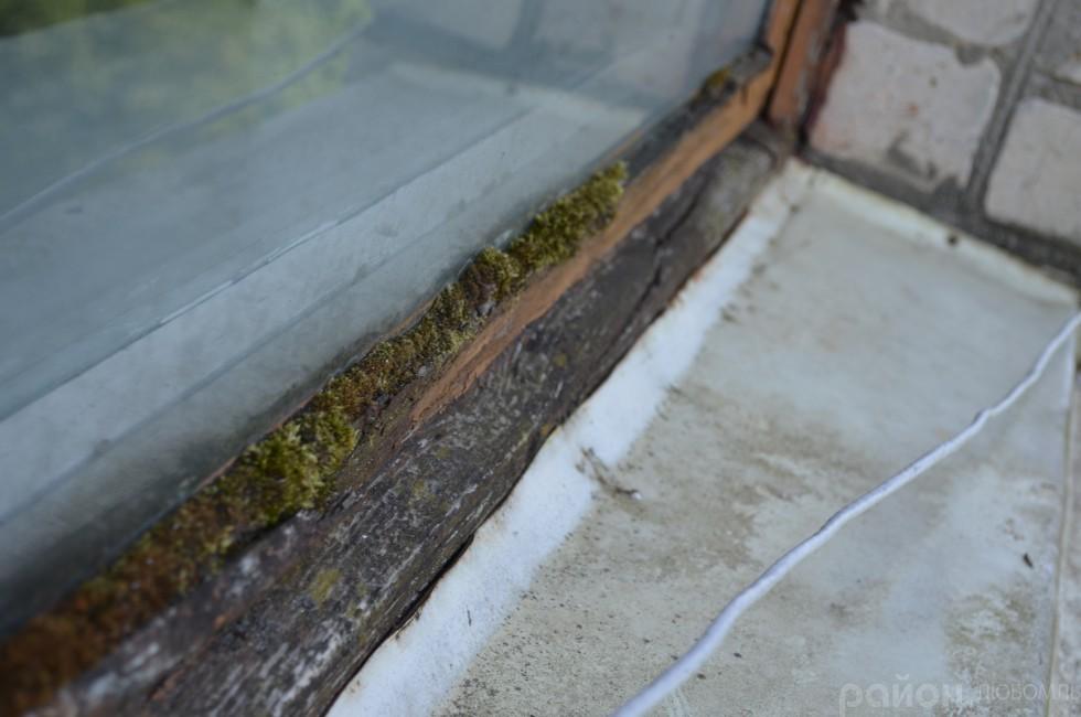 Із зовнішньої сторони вікно в учительській уже мохом поросло.