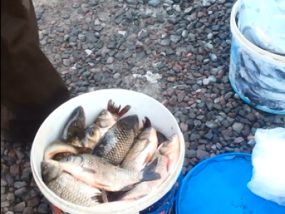У Любомлі на ринку чоловік незаконно продавав рибу