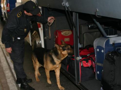 На «Ягодині» у пасажирки автобуса «винюхали» наркотики