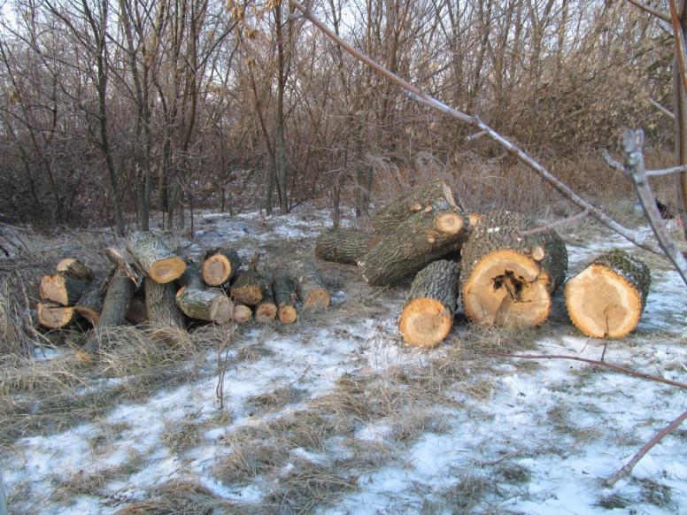 Незаконна порубка лісу