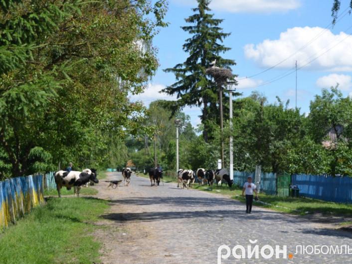Село Почапи сьогодні.
